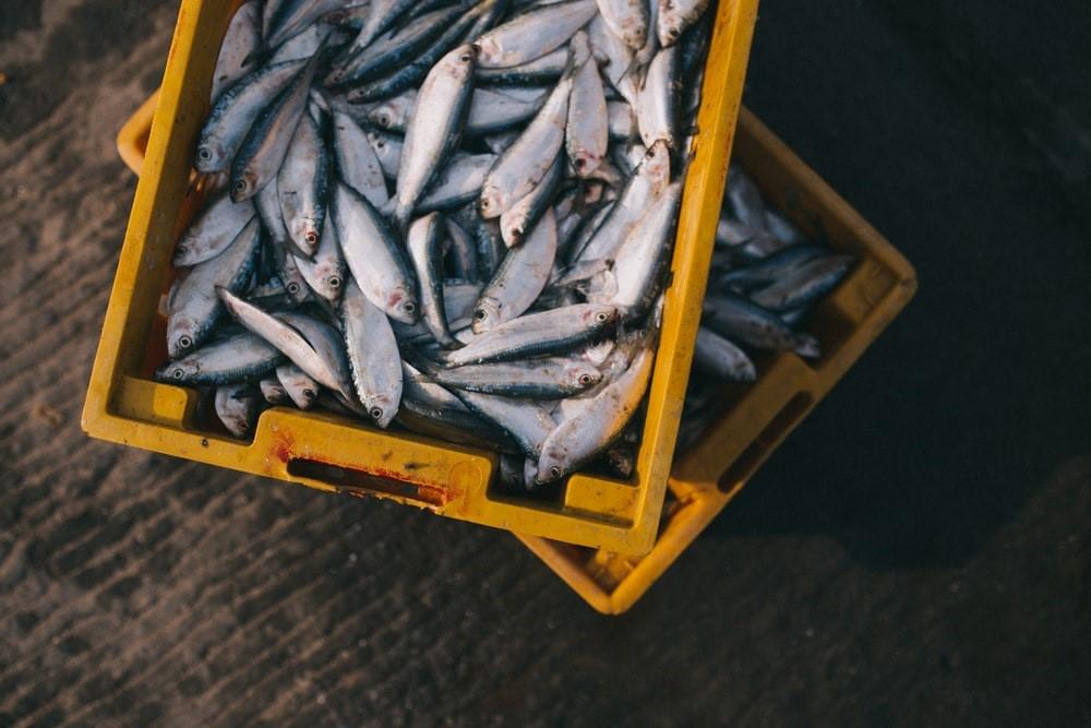 Fish oil image
