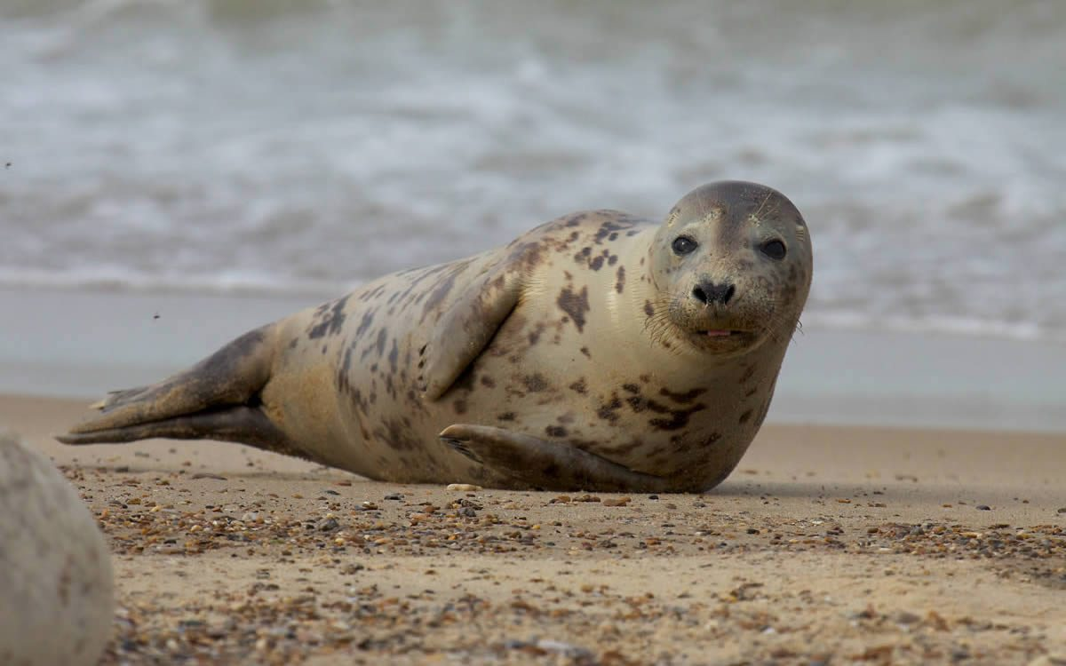 Grey-Seal-Seal-Sealing-Network-9