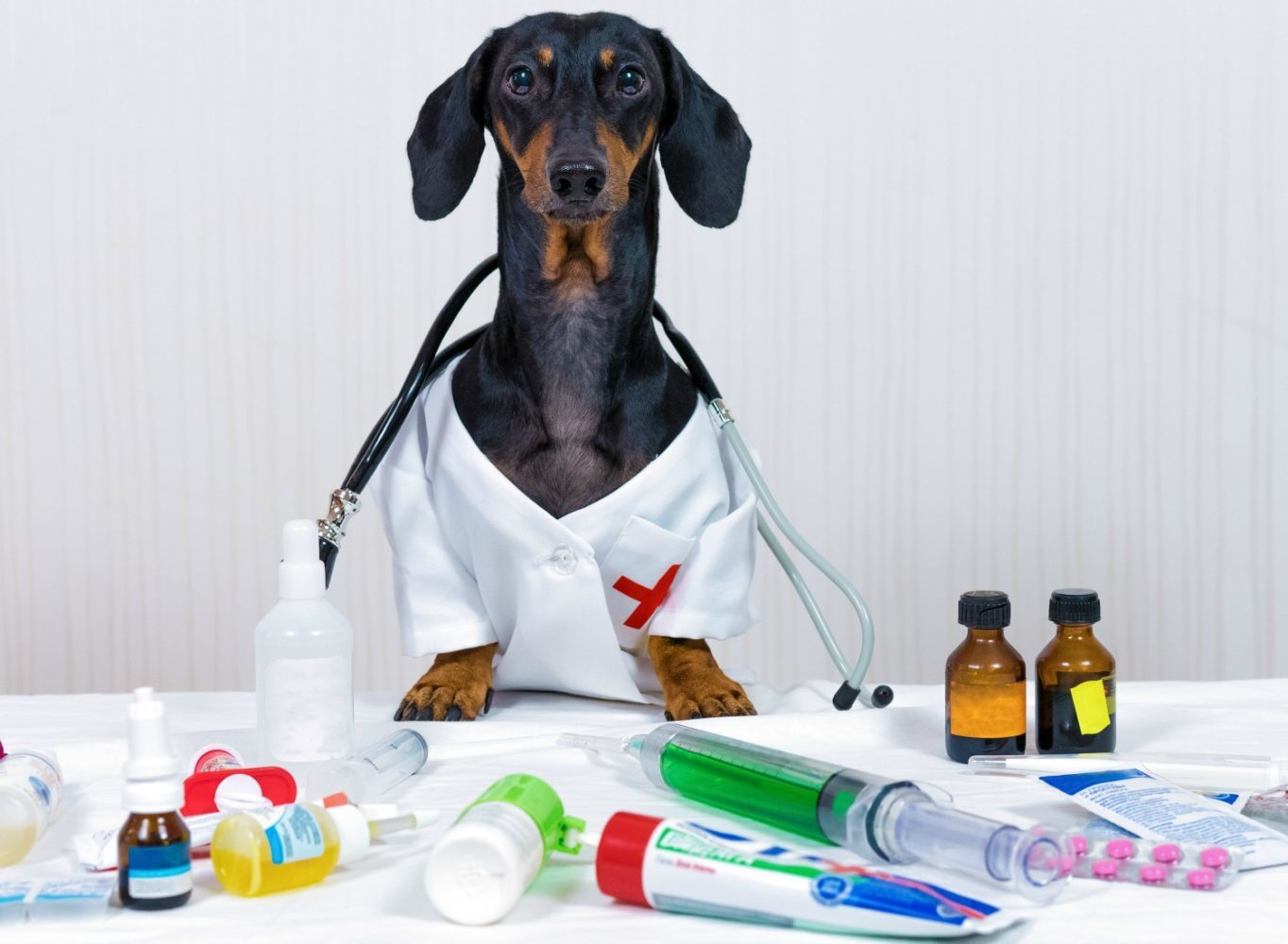 human-medicine-safe-for-dogs