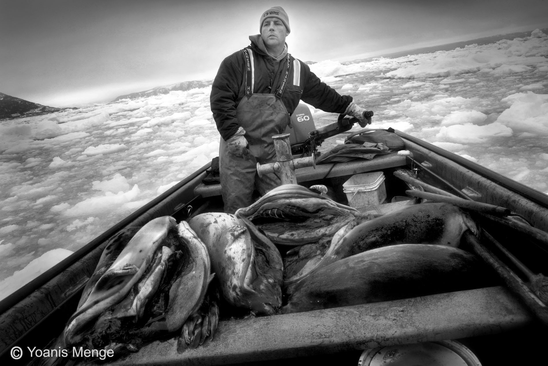 Seal Harvest (17) - Yoanis Menge Photographe - Canadian Seal Products