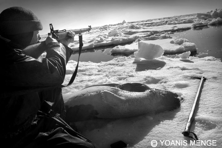 Seal Harvest (18) - Yoanis Menge Photographe - Canadian Seal Products