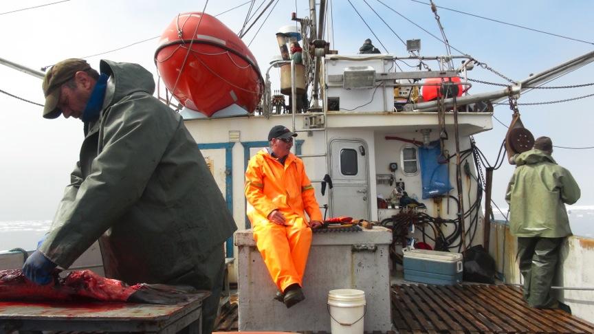 Seal Harvest (34)- Anne Troake Filmmaker - Canadian Seal Products