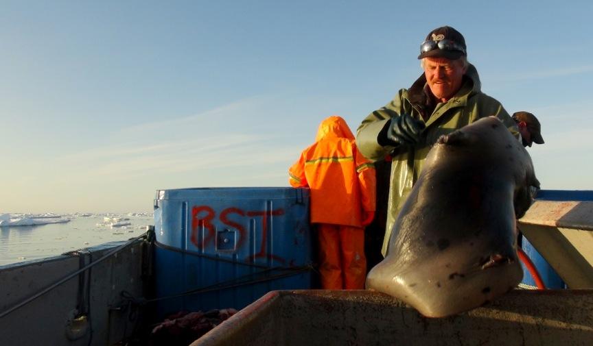 Seal Harvest (36)- Anne Troake Filmmaker - Canadian Seal Products