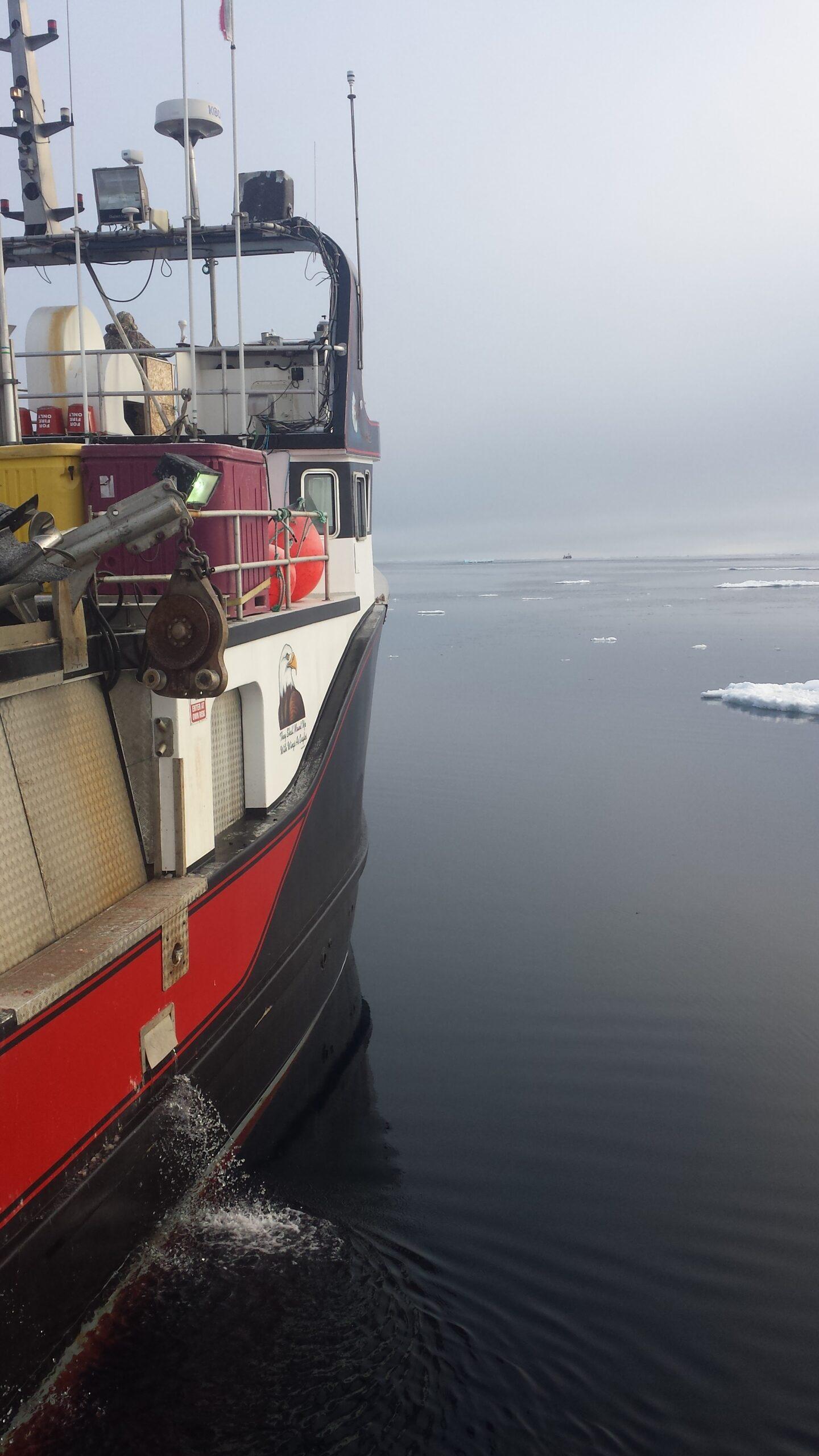 Seal Harvest (37)- Anne Troake Filmmaker - Canadian Seal Products