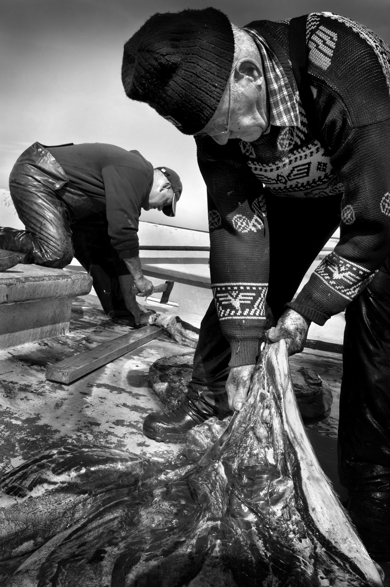 Seal Harvest (4) - Yoanis Menge Photographe - Canadian Seal Products