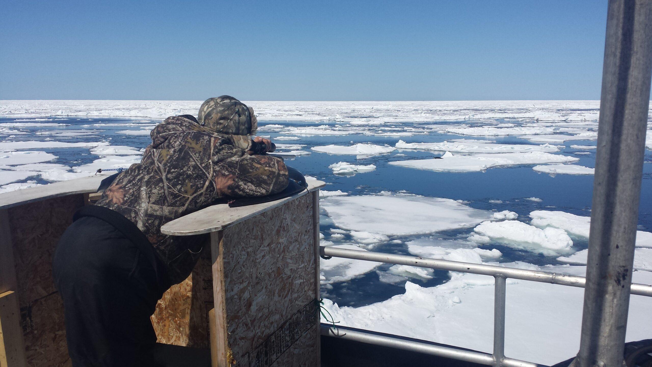 Seal Harvest (40)- Anne Troake Filmmaker - Canadian Seal Products