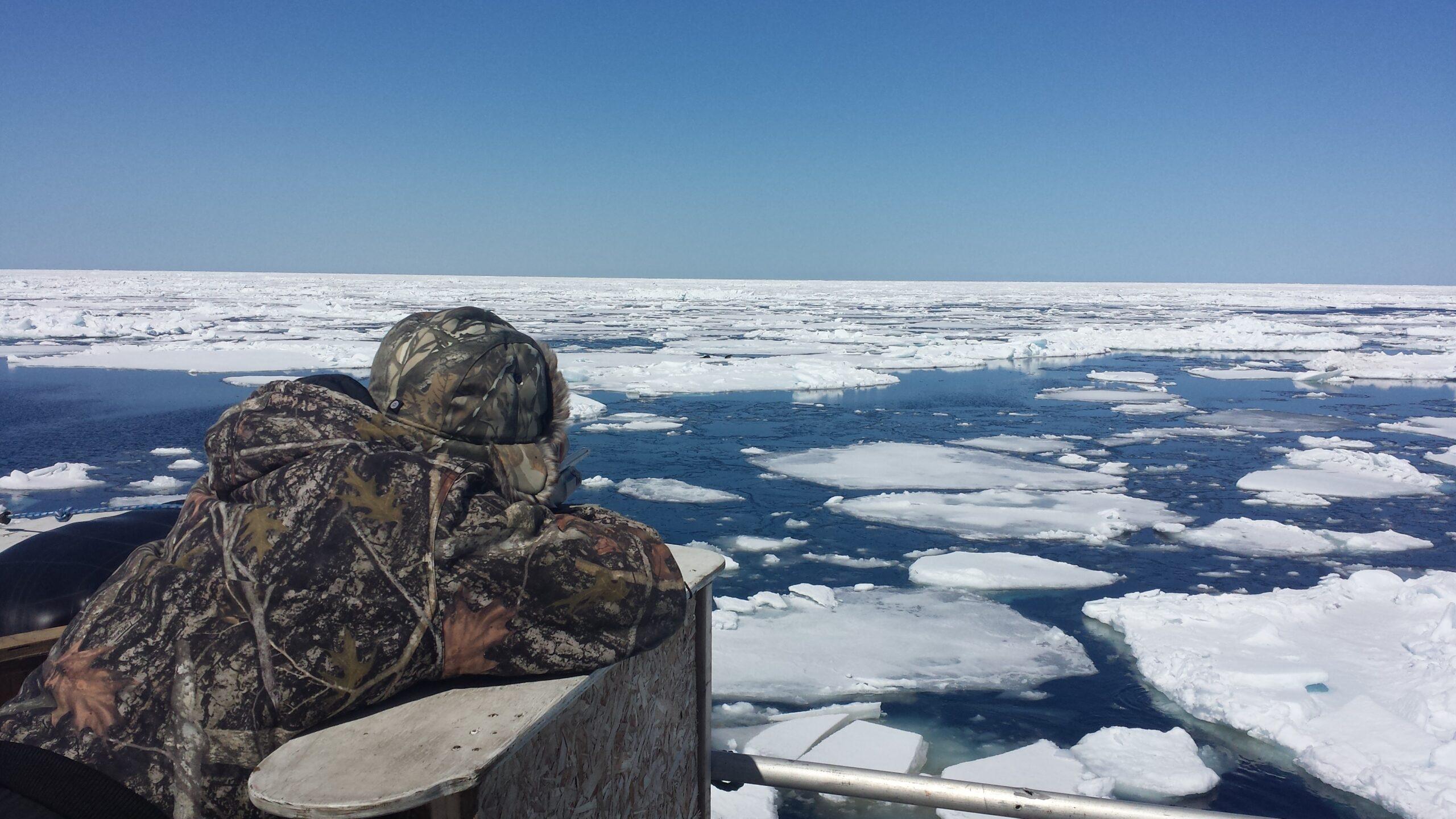 Seal Harvest (41)- Anne Troake Filmmaker - Canadian Seal Products