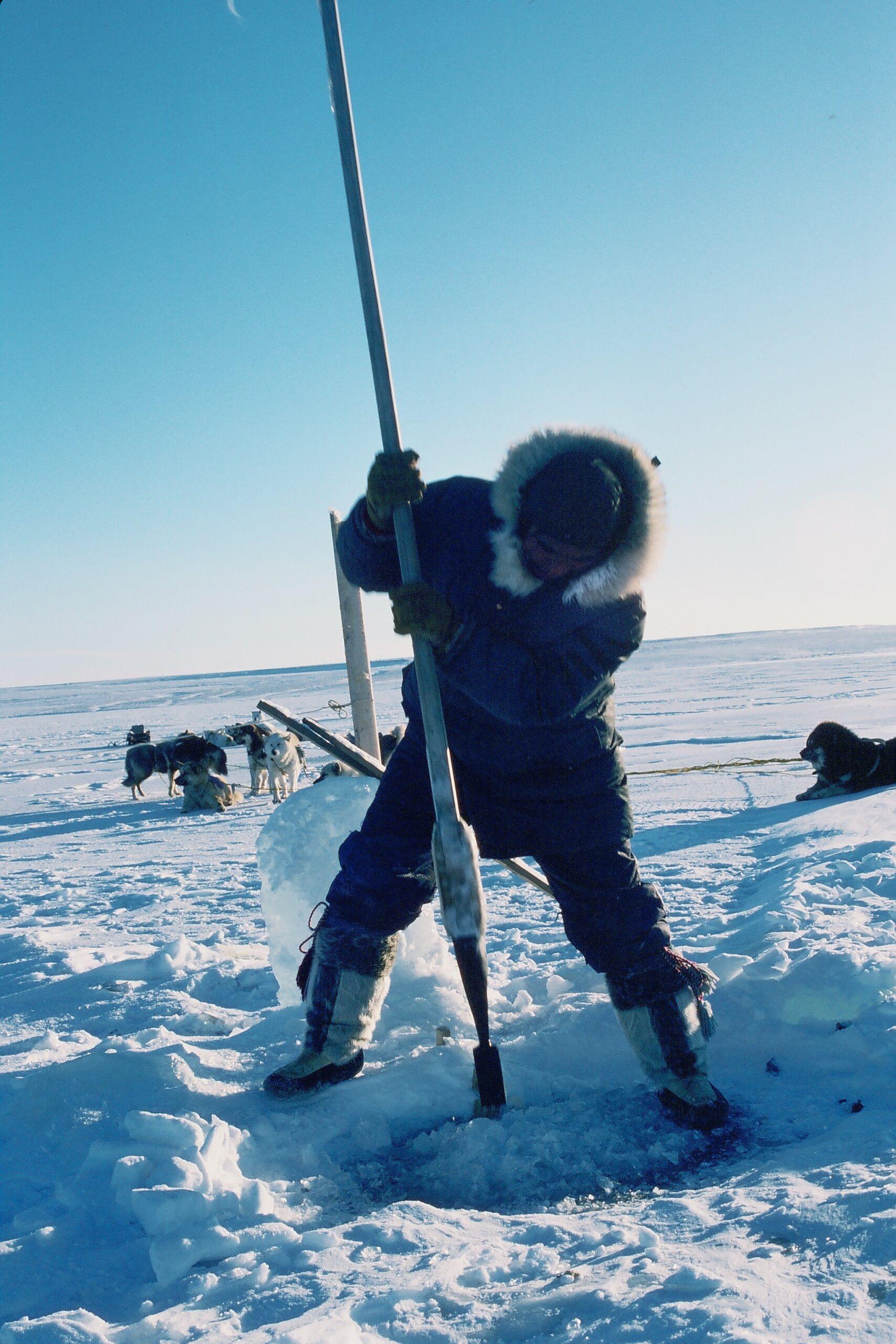 Seal & Indigenous Communities Pictures (14)