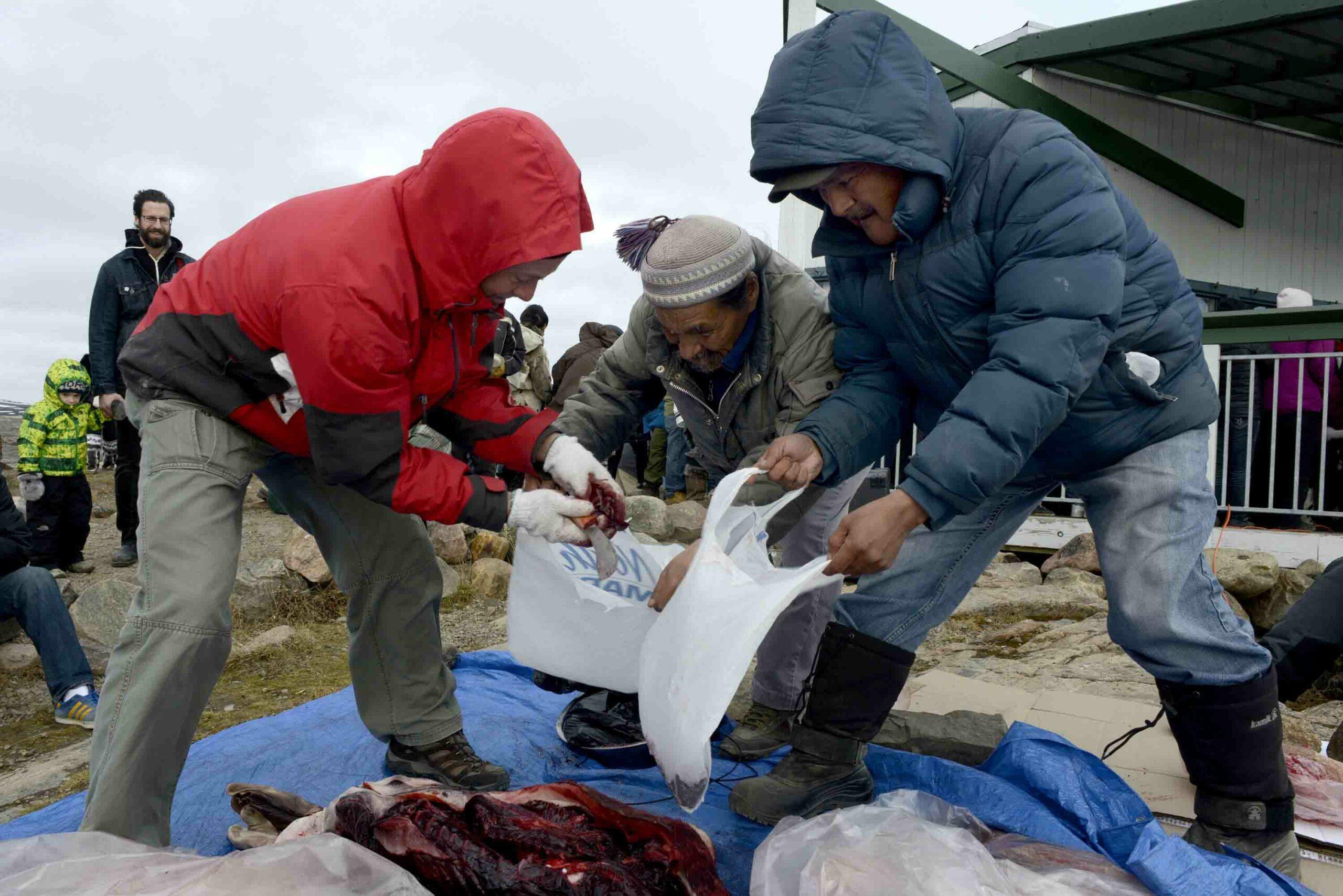 Seal & Indigenous Communities Pictures (7)