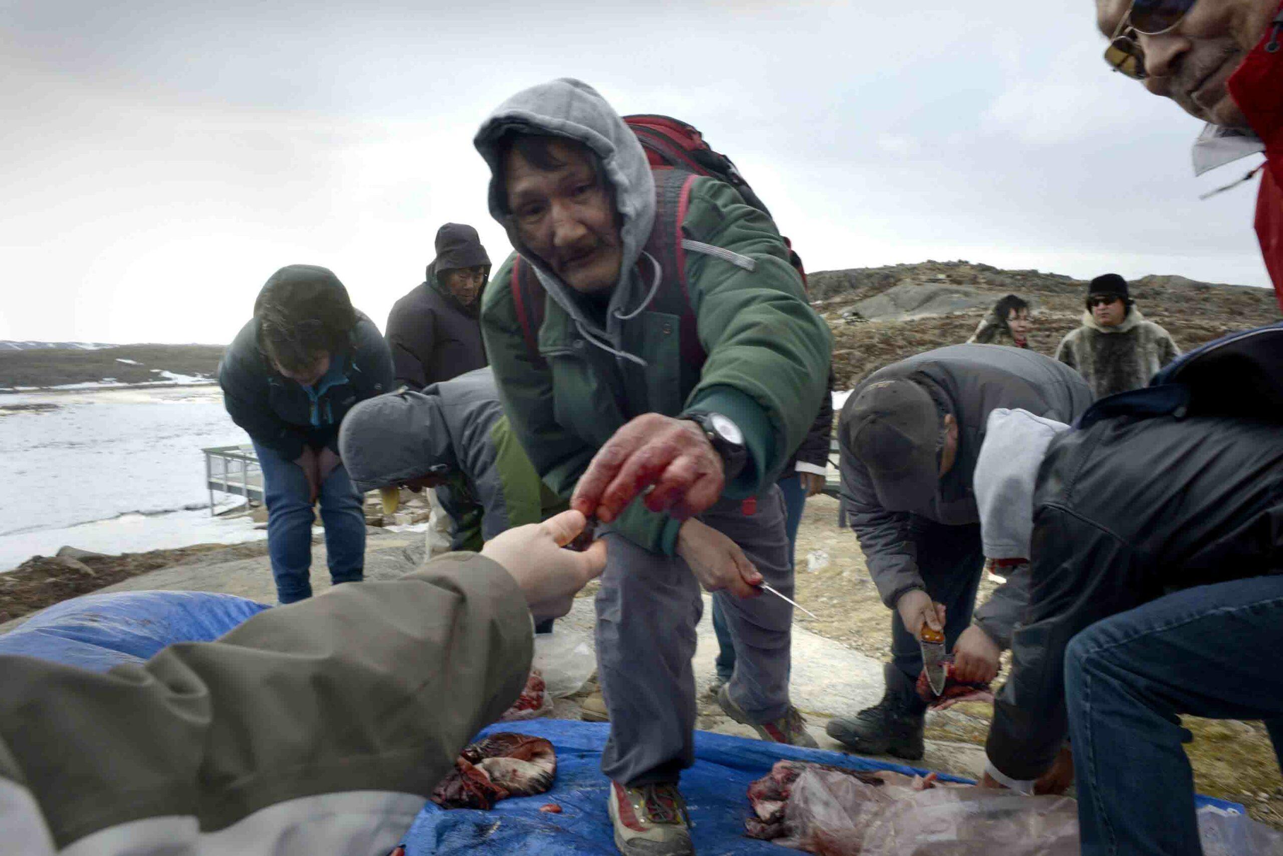 Seal & Indigenous Communities Pictures (8)