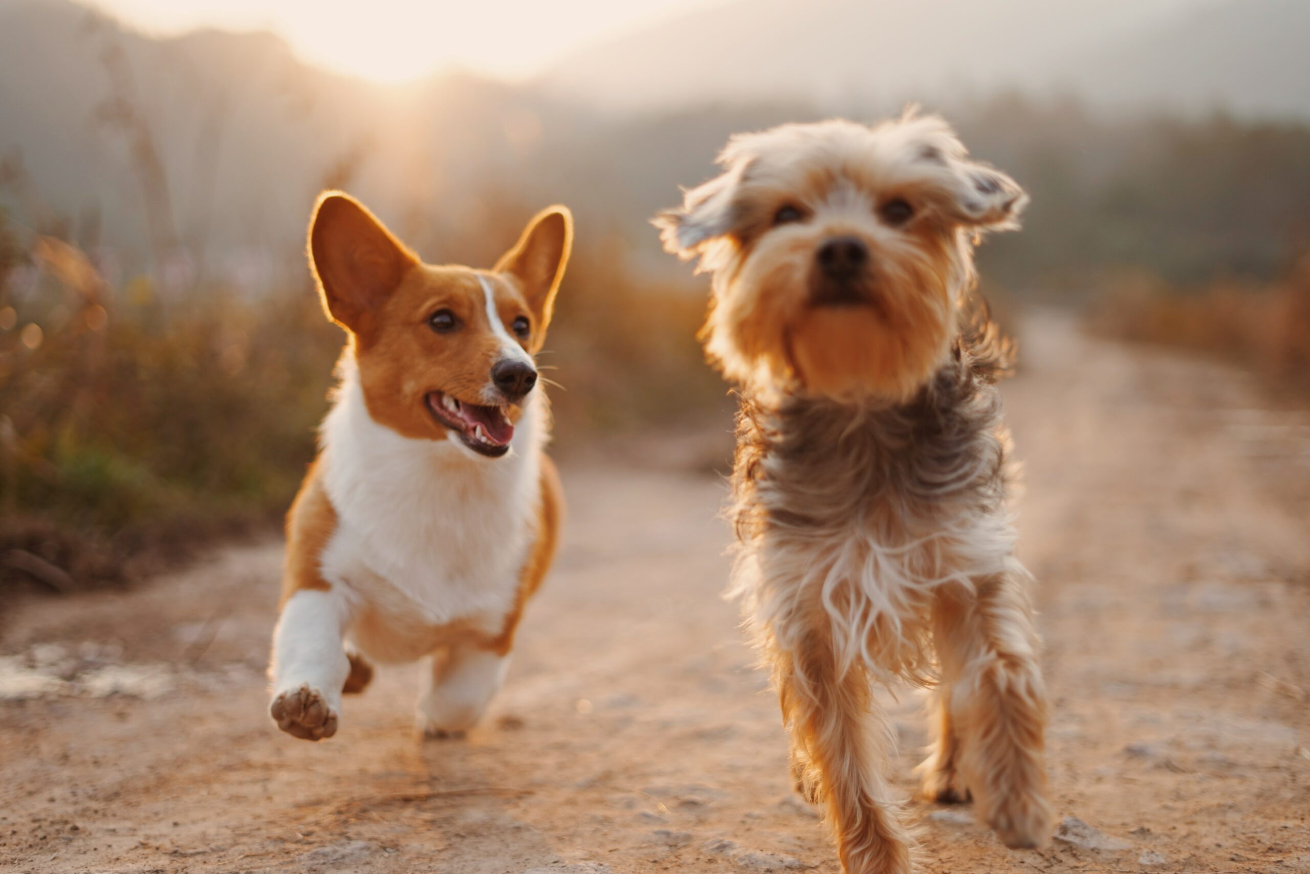 Are Omega-3 good for your dog - Canadian Seal Products